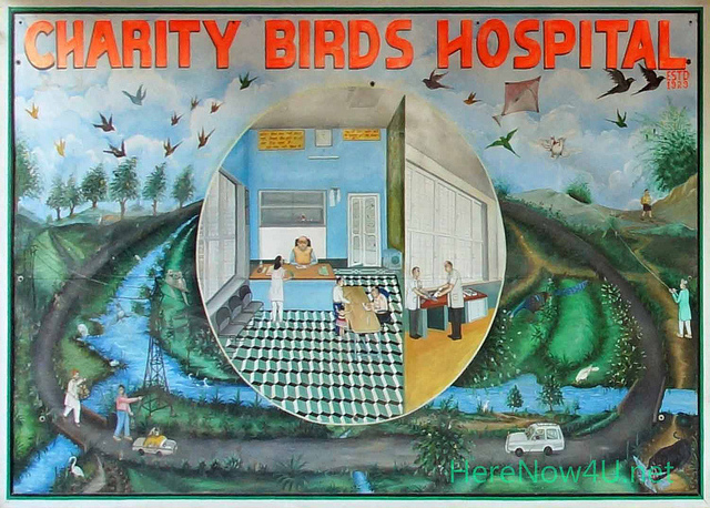 Delhi  Charity Birds Hospital 01147 X