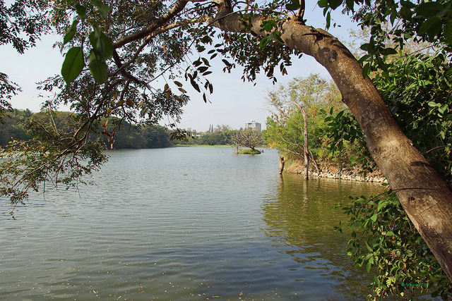 2014.01.18 Mysore - Karanji Lake - Nature Park 06328